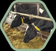 Кормовые добавки для всех видов сельскохозяйственных животных и птицы